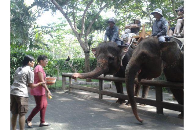 visita elefanti