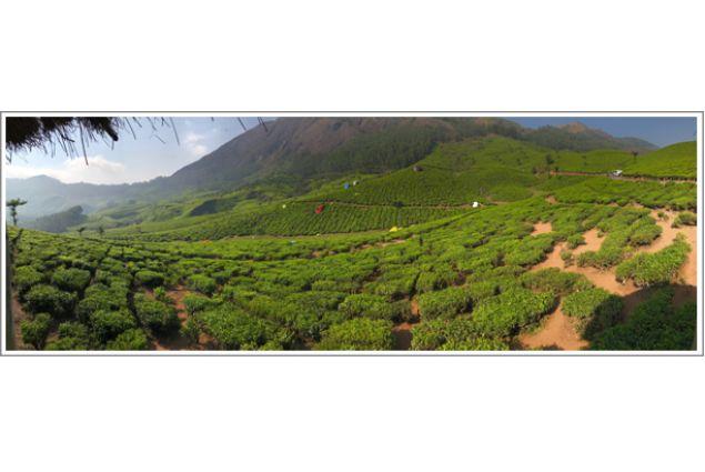 Montagne coperte dalle coltivazioni da tè