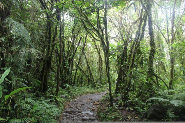Un sentiero nella foresta costaricense