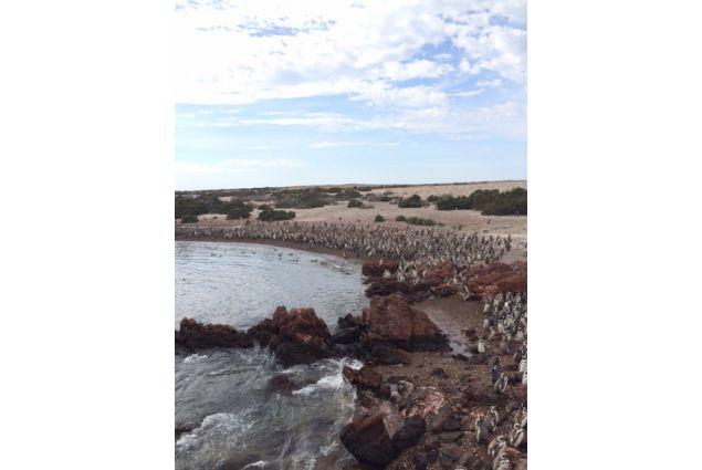 La pinguinera di Punta Tombo