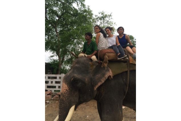 Giro sul dorso di elefante