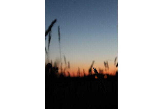 campo al tramonto