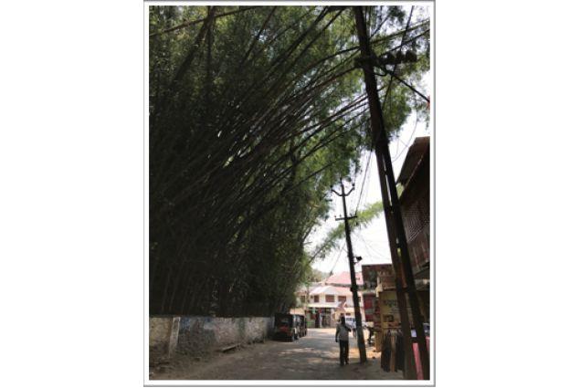 Foreste di bambù ai bordi della strada