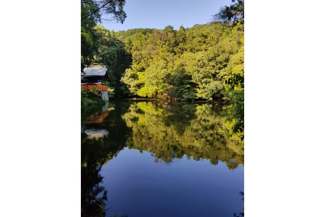 Natura narcisa: <em>In un angolo nascosto tra le canne di bambù a Fushimi Inari, Kyoto, si può osservare la natura che ammira la propria bellezza riflettendosi su uno specchio d'acqua. Come Narciso, figlio della ninfa Liriope e del dio fluviale Cefiso, la natura è consapevole della propria bellezza, ma a differenza di Narciso non disprezza le persone: accoglie. In Giappone la natura e la cultura ti accolgono fin dal primo istante.</em> Foto di Noemi