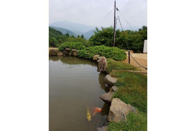 <div>Macaco e carpe in armonia: <em>foto scattata al parco delle scimmie ad Arashiyama. I macachi vivono liberi nella foresta e in armonia con la natura e con l'uomo. Il rispetto per l'animale è sacro.. </em>Foto di Noemi</div> <div></div>